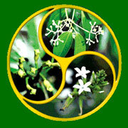 Tulsi Herbal Products